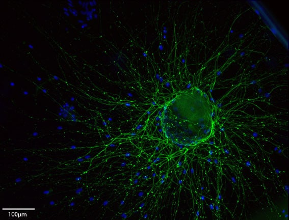Stem cell engineering image